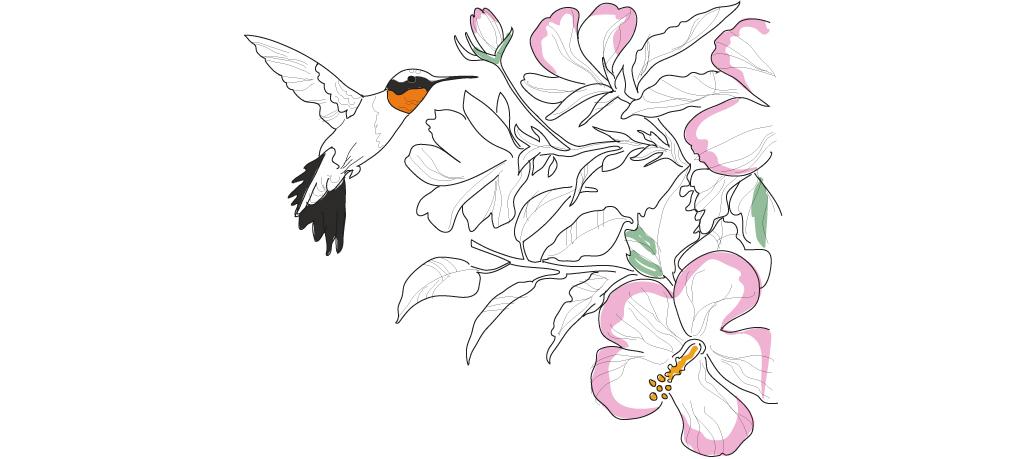 En illustrerad bild av en kolibri och rosa blommor
